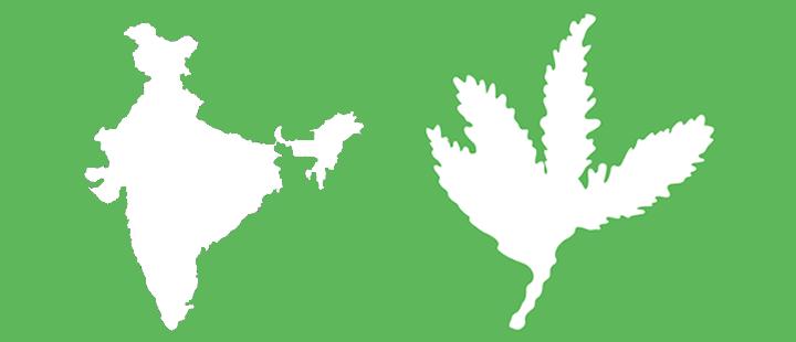 india sequoia